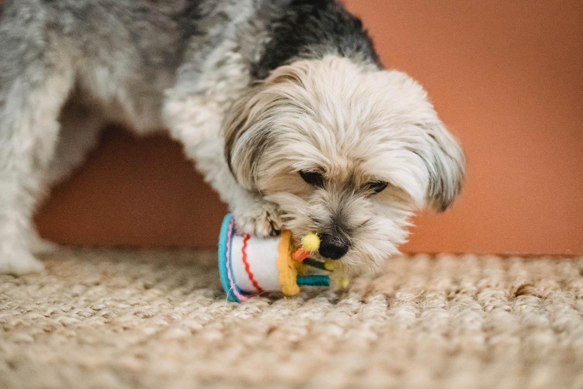 verjaardag hond jarig